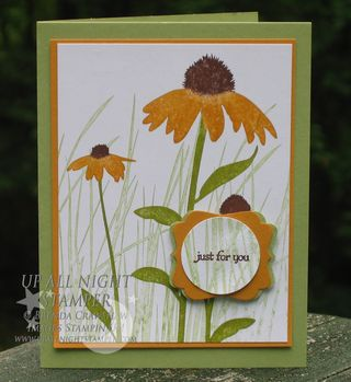 FFF - Fall Coneflowers