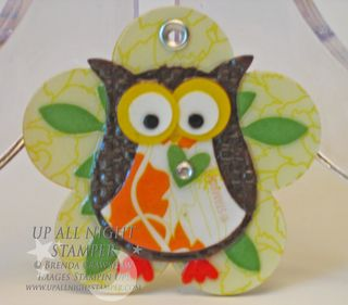 Owl Up Close